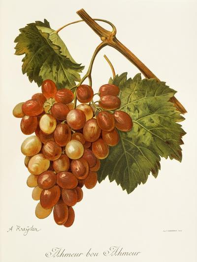 Ahmeur Bou Hameur Grape-A. Kreyder-Giclee Print