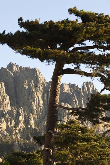 Aiguilles De Bavella Peaks, La Alta Rocca, Corsica, France-Walter Bibikow-Photographic Print