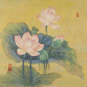 Dream Lotus by Ailian Price