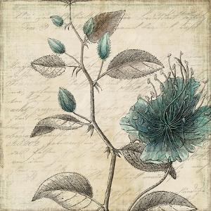 Blue Botanical II by Aimee Wilson