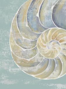 Pastel Shell II by Aimee Wilson