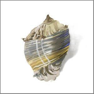 Shell Ashore by Aimee Wilson