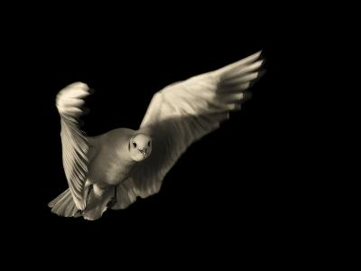 Air Breaking- Anthonyroberts-Photographic Print