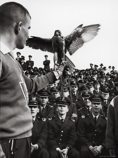 Air Force Academy Cadets Watching Handler Performing with the Air Force Mascot, a Falcon-Leonard Mccombe-Photographic Print