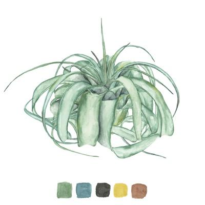 https://imgc.artprintimages.com/img/print/air-plant-study-i_u-l-q1e85lj0.jpg?p=0