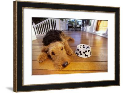 Airedale Terrier Lying by Food Dish-DLILLC-Framed Photographic Print