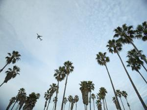 Airplane Soaring over Palm Trees