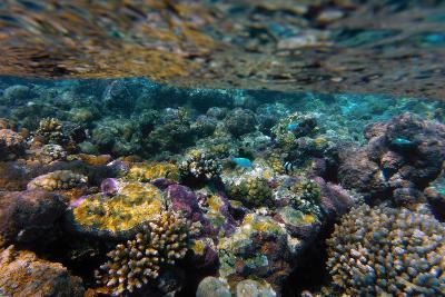 Aitutaki, Cook Island, Polynesia, South Pacific Ocean--Photographic Print