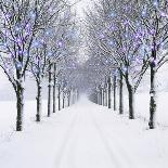 Small-Leaved Lime Trees in Snow-Ake Lindau-Photographic Print
