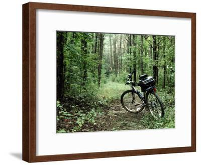 A Bike Rests on a Woodland Trail