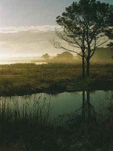 Scenic View of the Misty Marsh Landscape by Al Petteway