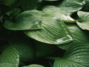 Water Drops on Plant Leaves by Al Petteway