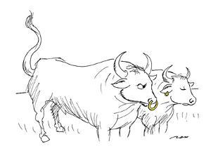 Bull with gold nose ring angrily looks at cow with gold hoop in her right ? - New Yorker Cartoon by Al Ross