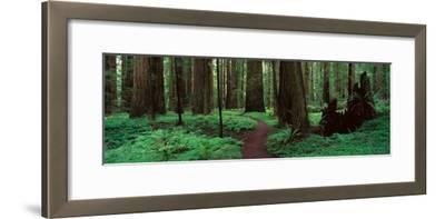 Redwoods Path