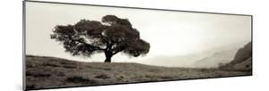 Black Oak I by Alan Blaustein