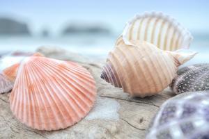 Crescent Beach Shells 10 by Alan Blaustein