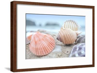 Crescent Beach Shells 10
