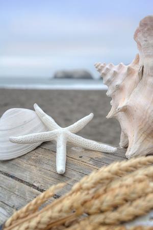 Crescent Beach Shells 12
