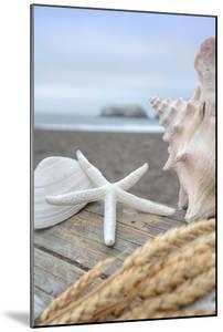 Crescent Beach Shells 12 by Alan Blaustein