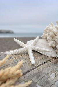 Crescent Beach Shells 13 by Alan Blaustein