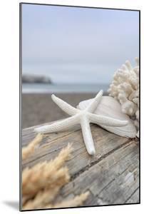 Crescent Beach Shells 13 by Alan Blaustein