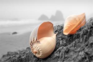 Crescent Beach Shells #20 by Alan Blaustein