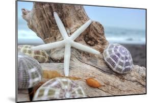 Crescent Beach Shells 7 by Alan Blaustein
