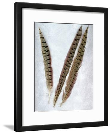 Feathers #3