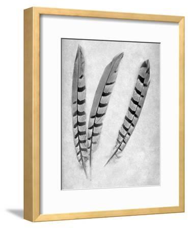 Feathers B-W #1