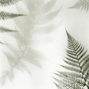 Ferns No. 2 by Alan Blaustein