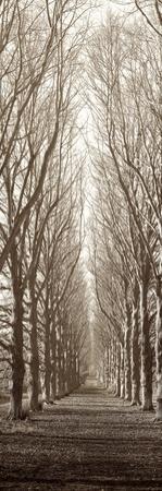 Hampton Gates Promenade by Alan Blaustein