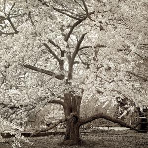 Hampton Magnolia #2 by Alan Blaustein