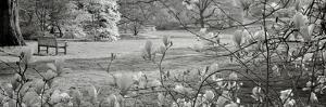 Hampton Magnolia I by Alan Blaustein