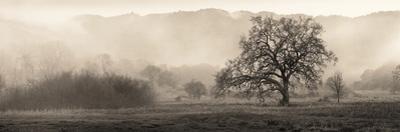 Meadow Oak Tree by Alan Blaustein