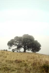 Oak Tree #52 by Alan Blaustein