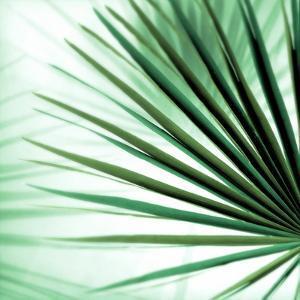 Palm Leaf #1 by Alan Blaustein