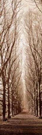 Poplar Trees by Alan Blaustein