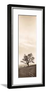 Sentinel Oak Tree by Alan Blaustein