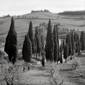 Tuscany IV by Alan Blaustein