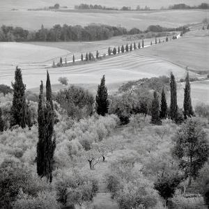 Tuscany VI by Alan Blaustein