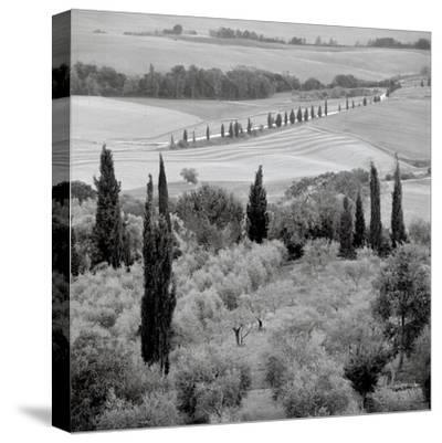 Tuscany VI