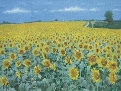 Field of Sunflowers, 2002 by Alan Byrne