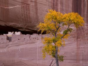 Arizona, Canyon De Chelly National Monument, USA by Alan Copson