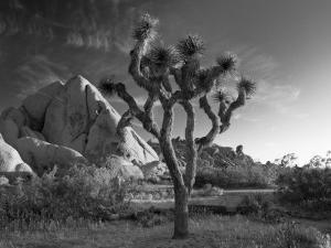 California, Joshua Tree National Park, USA by Alan Copson
