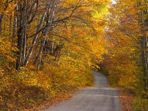 Fall Colours, Baxter State Park, Maine, New England, United States of America, North America by Alan Copson