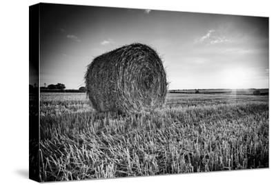 France, Centre Region, Indre-Et-Loire, Sainte Maure De Touraine, Straw Bale in Field