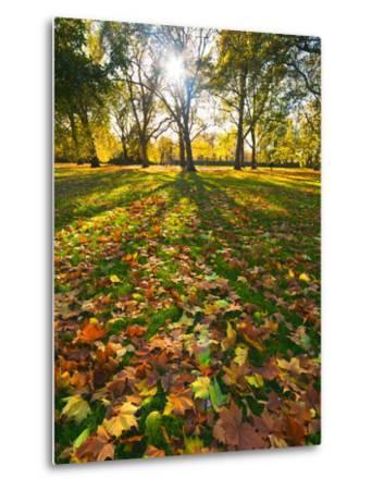 Hyde Park in Autumn, London, England, United Kingdom, Europe