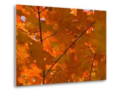 USA, Maine, Wiscasset, Autumn Leaves / Fall Colors