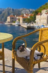 Waterside Cafe and Cat, Perast, Bay of Kotor, UNESCO World Heritage Site, Montenegro, Europe by Alan Copson