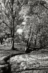 A Small Creek by Alan Hausenflock